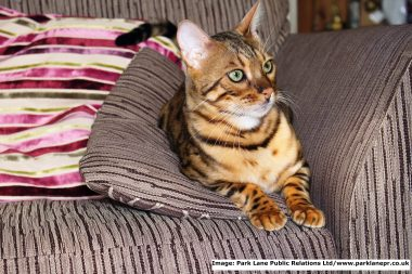 Great Alne Big Cat