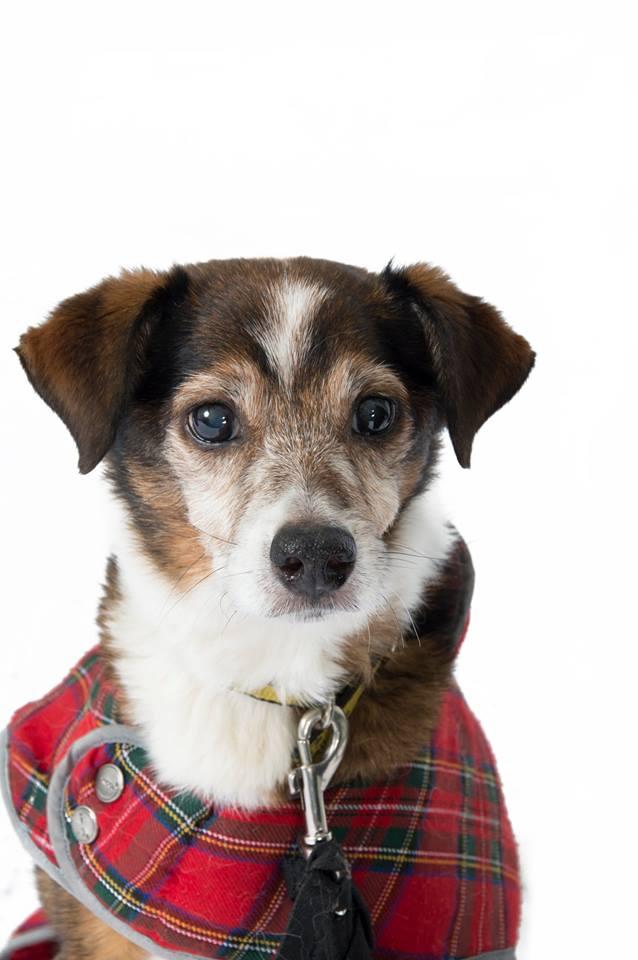 12 Dogs Of Christmas.The 12 Dogs Of Christmas Dogs Trust S Oldest Resident