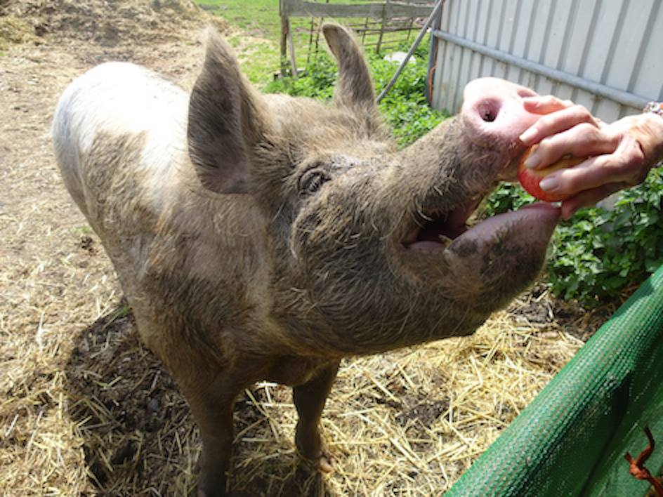 Struggling animal sanctuary appeals to businesses for waste food